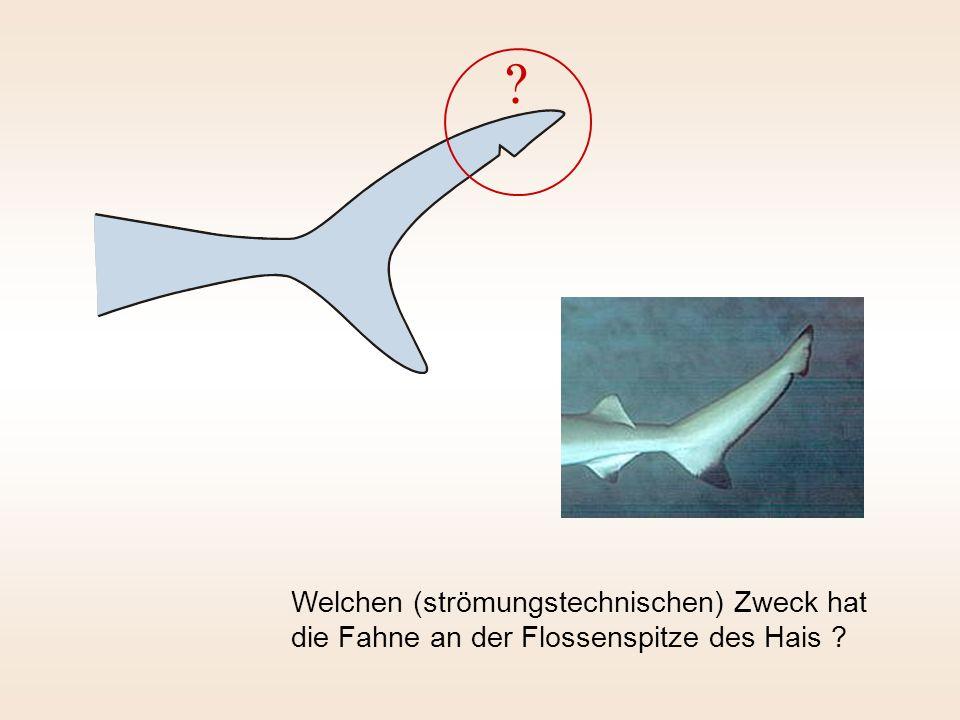 Welchen (strömungstechnischen) Zweck hat die Fahne an der Flossenspitze des Hais ? ?
