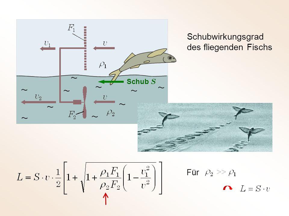 Schubwirkungsgrad des fliegenden Fischs Schub S Für