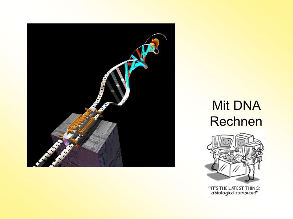 Mit DNA Rechnen