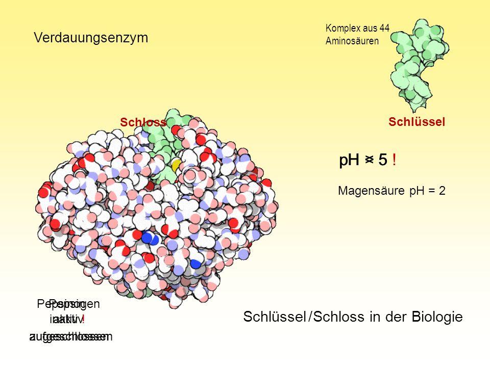 Schlüssel / Schloss in der Biologie Pepsinogen Pepsin Komplex aus 44 Aminosäuren pH > 5 pH < 5 ! Verdauungsenzym inaktiv aktiv ! Magensäure pH = 2 Sch
