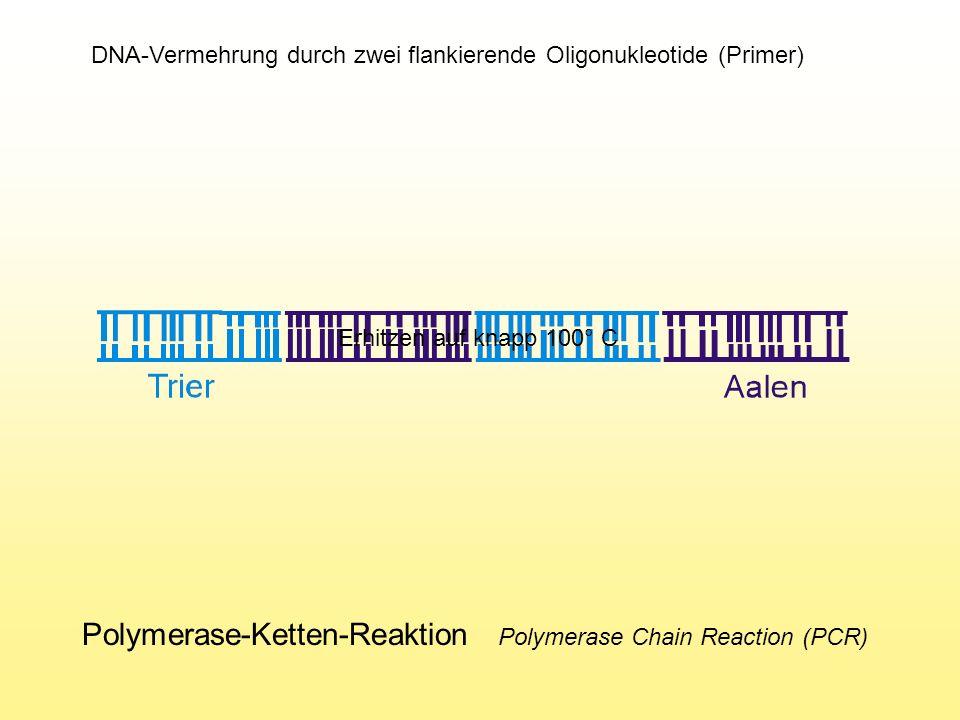 Polymerase-Ketten-Reaktion Polymerase Chain Reaction (PCR) DNA-Vermehrung durch zwei flankierende Oligonukleotide (Primer) Erhitzen auf knapp 100° C