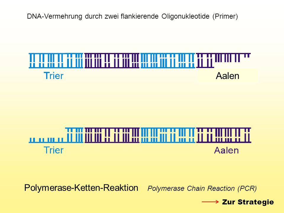Polymerase-Ketten-Reaktion Polymerase Chain Reaction (PCR) Aalen Zur Strategie DNA-Vermehrung durch zwei flankierende Oligonukleotide (Primer)