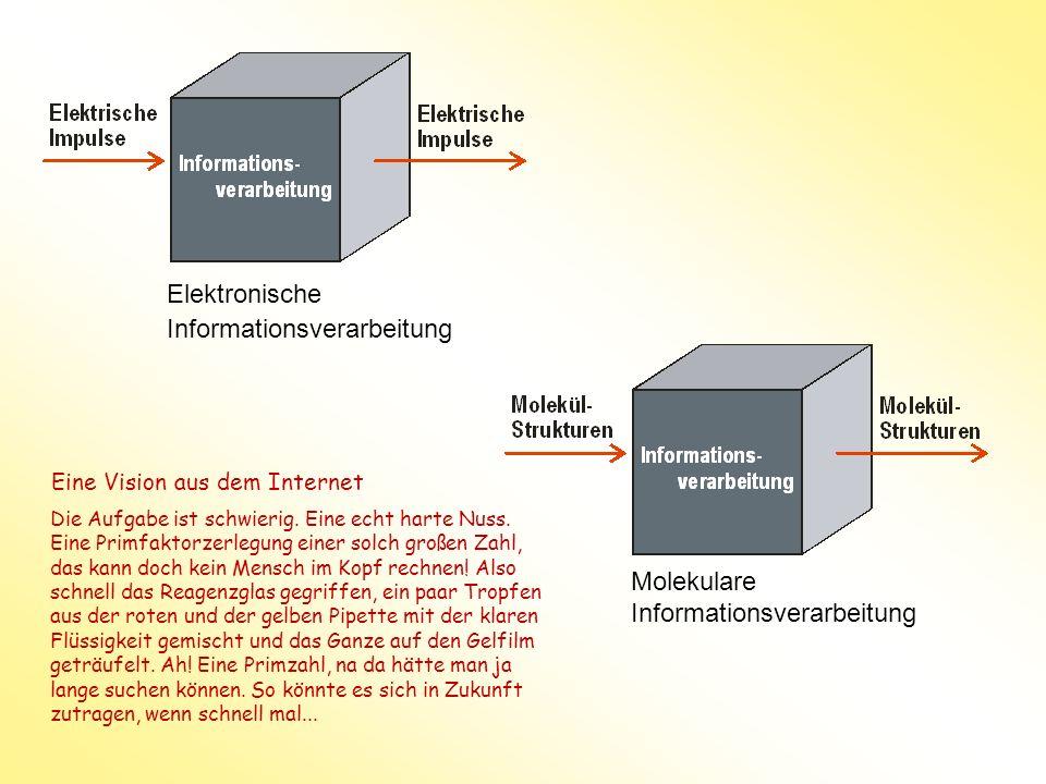 Elektronische Informationsverarbeitung Molekulare Informationsverarbeitung Die Aufgabe ist schwierig. Eine echt harte Nuss. Eine Primfaktorzerlegung e