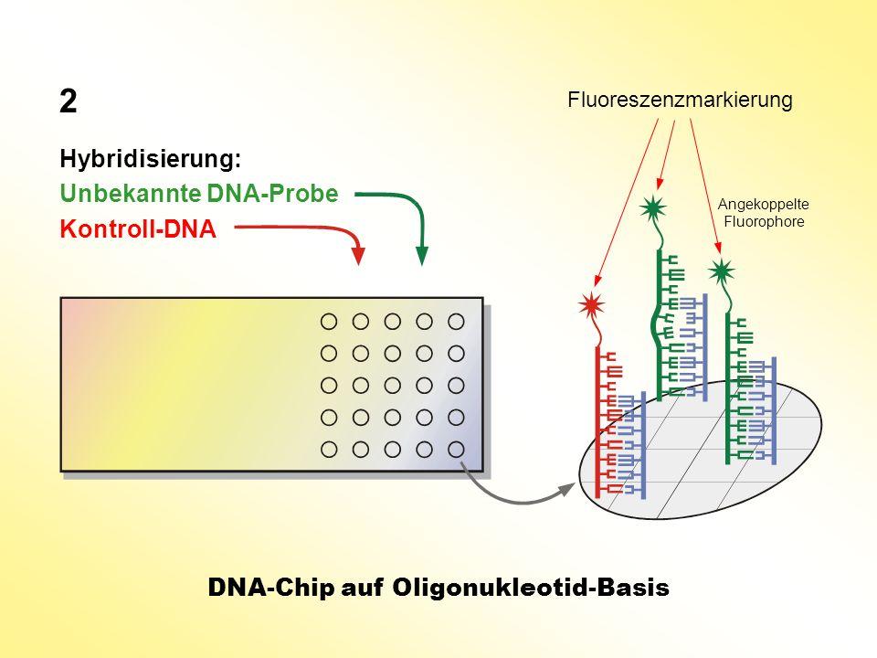 Hybridisierung: Unbekannte DNA-Probe Kontroll-DNA DNA-Chip auf Oligonukleotid-Basis 2 Fluoreszenzmarkierung Angekoppelte Fluorophore