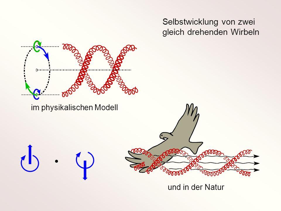 Selbstwicklung von zwei gleich drehenden Wirbeln im physikalischen Modell und in der Natur