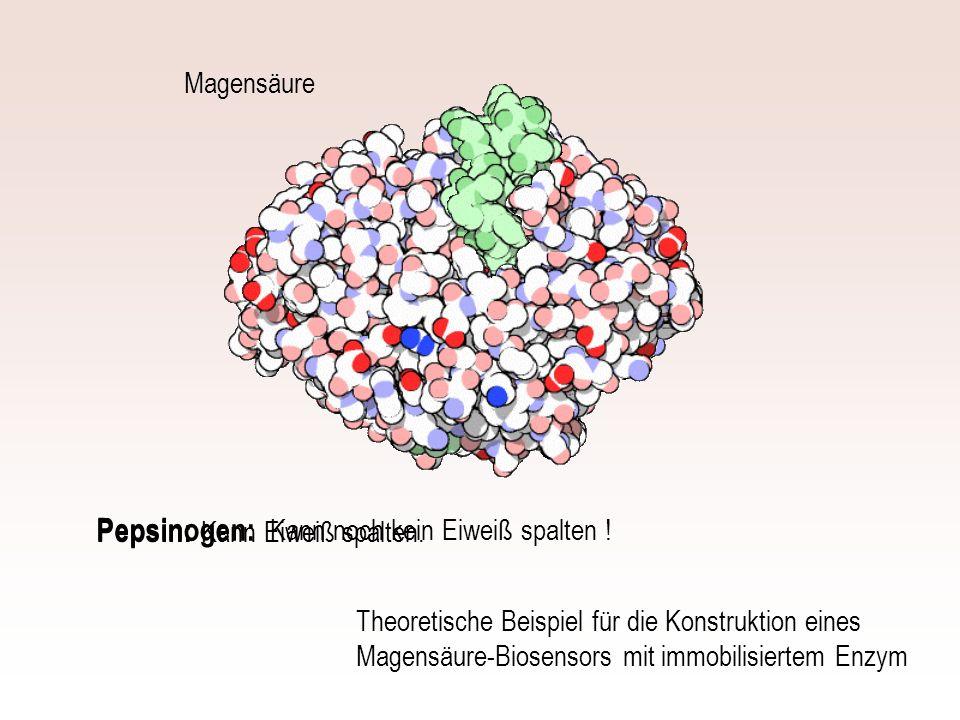 Kann noch kein Eiweiß spalten ! Magensäure Kann Eiweiß spalten. Pepsinogen: Pepsin: Theoretische Beispiel für die Konstruktion eines Magensäure-Biosen