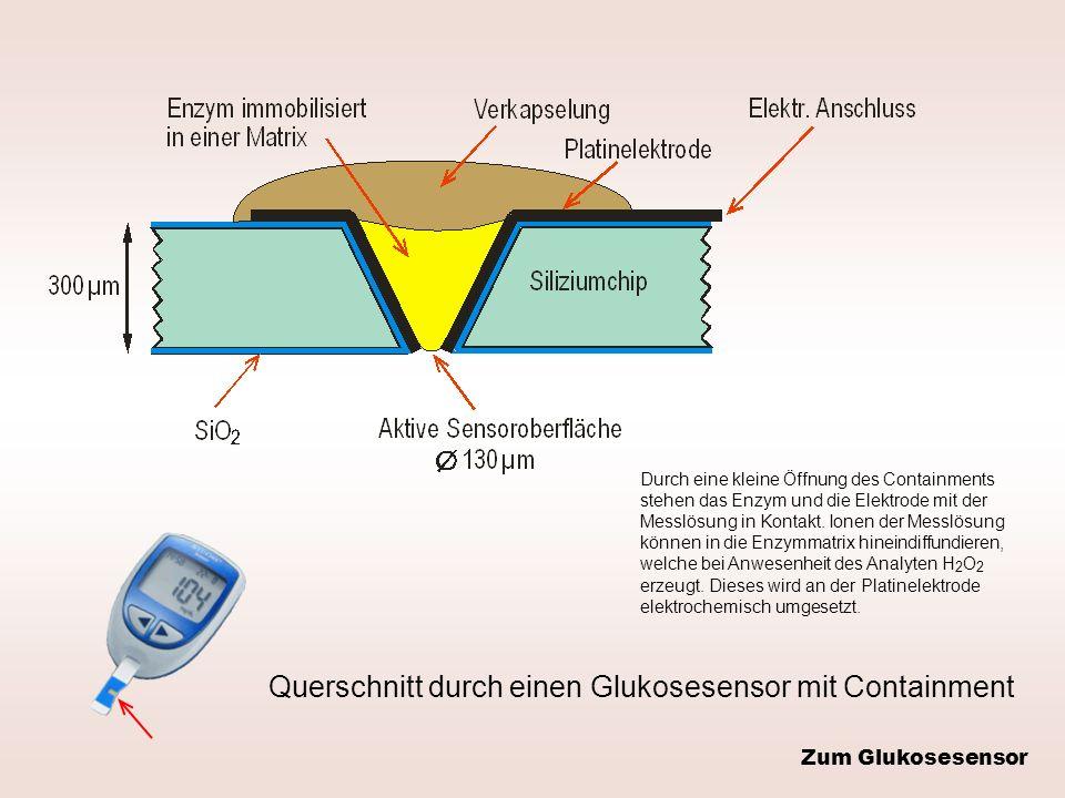 Querschnitt durch einen Glukosesensor mit Containment Durch eine kleine Öffnung des Containments stehen das Enzym und die Elektrode mit der Messlösung