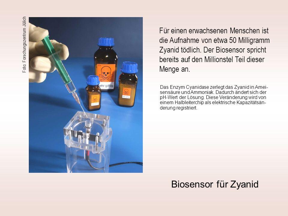 Foto: Forschungszentrum Jülich Biosensor für Zyanid Für einen erwachsenen Menschen ist die Aufnahme von etwa 50 Milligramm Zyanid tödlich. Der Biosens
