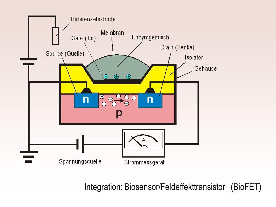 Integration: Biosensor/Feldeffekttransistor (BioFET)