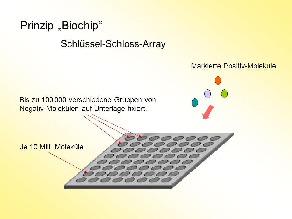 Prinzip Biochip Schlüssel-Schloss-Array Bis zu 100 000 verschiedene Gruppen von Negativ-Molekülen auf Unterlage fixiert. Markierte Positiv-Moleküle Je