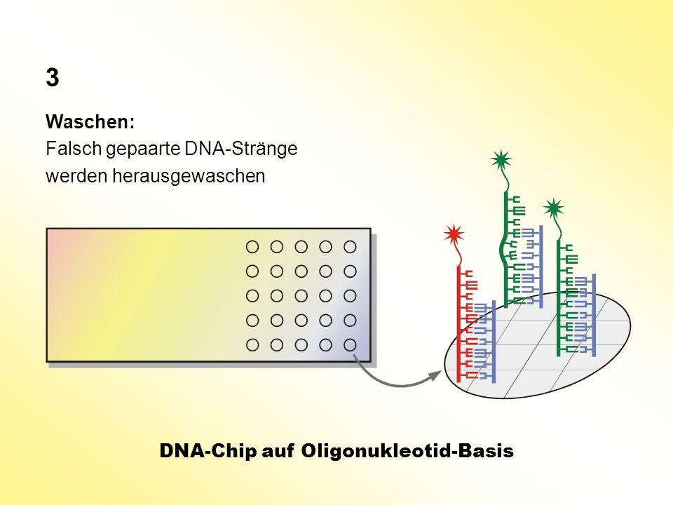 Waschen: Falsch gepaarte DNA-Stränge werden herausgewaschen DNA-Chip auf Oligonukleotid-Basis 3