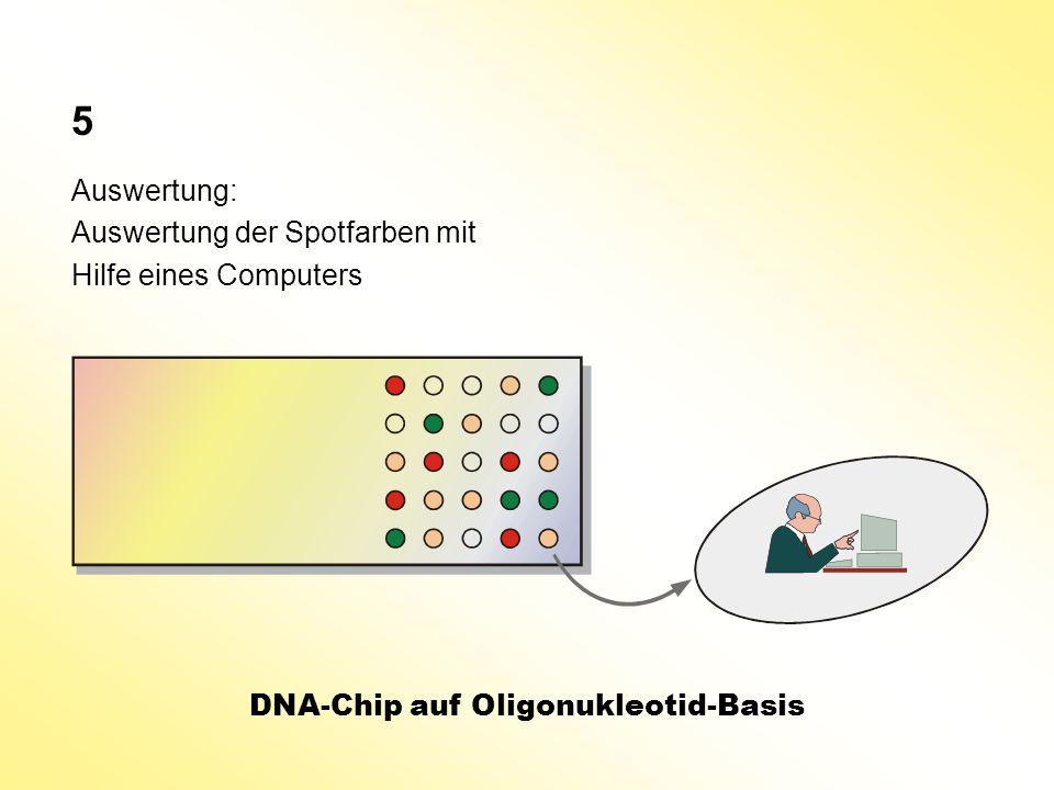 Auswertung: Auswertung der Spotfarben mit Hilfe eines Computers DNA-Chip auf Oligonukleotid-Basis 5