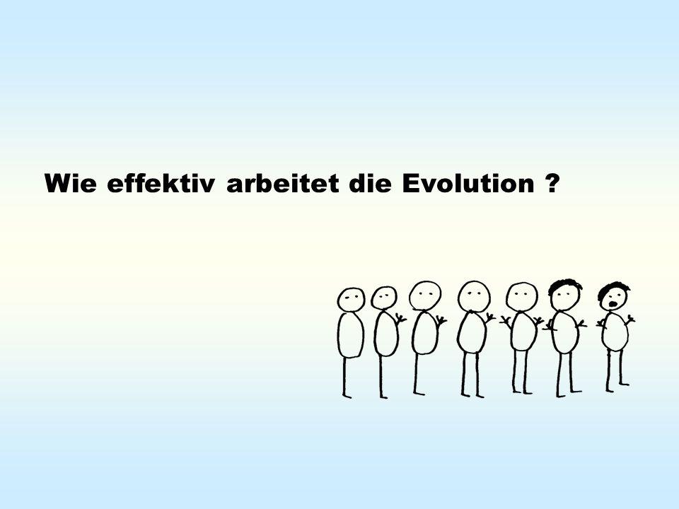 Wie effektiv arbeitet die Evolution ?