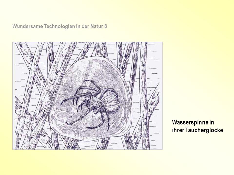 Wasserspinne in ihrer Taucherglocke Wundersame Technologien in der Natur 8