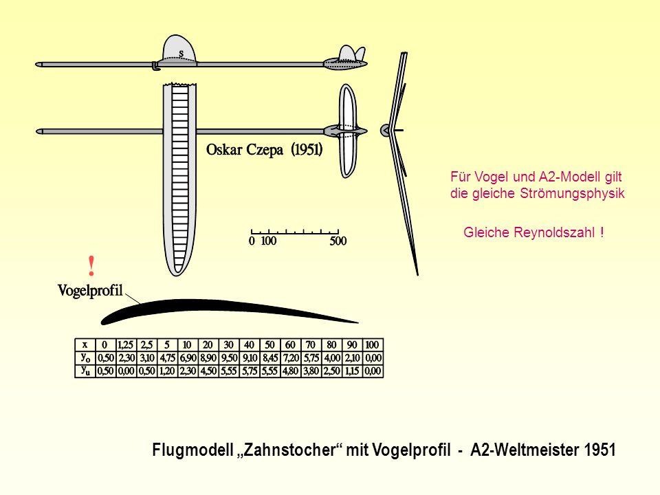 Flugmodell Zahnstocher mit Vogelprofil - A2-Weltmeister 1951 ! Für Vogel und A2-Modell gilt die gleiche Strömungsphysik Gleiche Reynoldszahl !