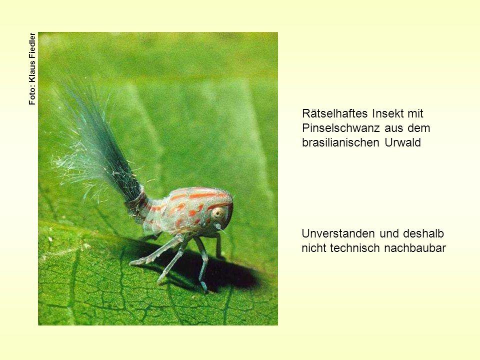 Foto: Klaus Fiedler Rätselhaftes Insekt mit Pinselschwanz aus dem brasilianischen Urwald Unverstanden und deshalb nicht technisch nachbaubar