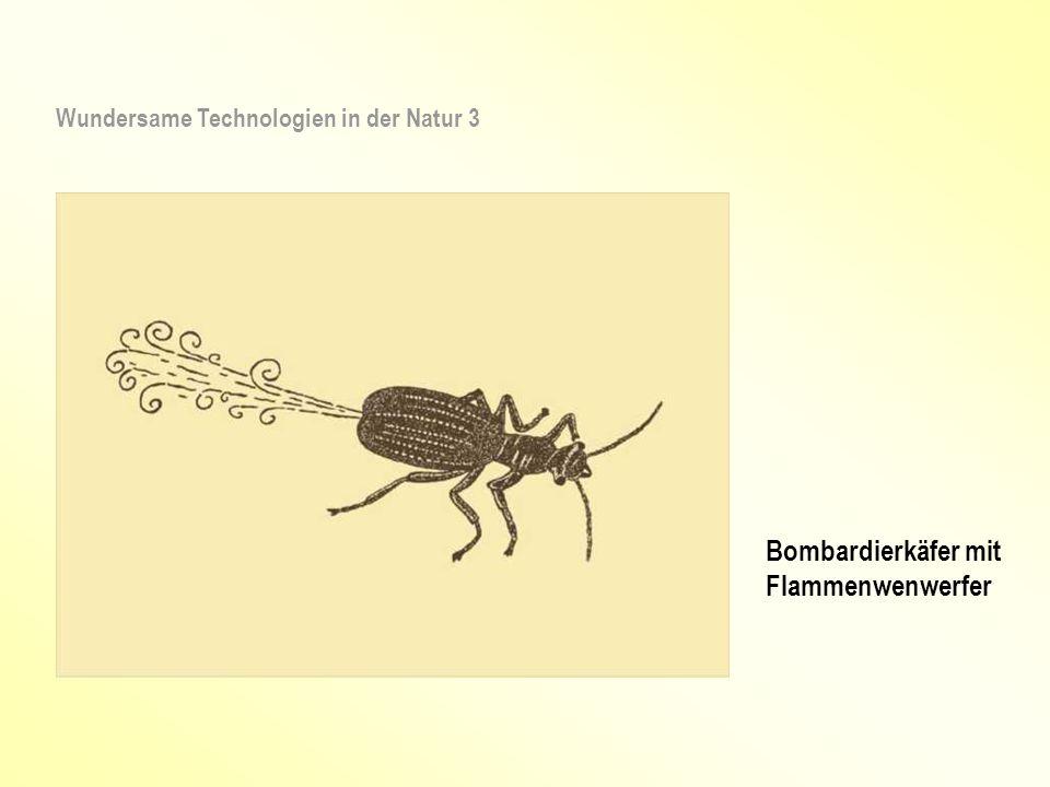 Raoul Heinrich Francé (1874 – 1943) und sein bionischer Salzstreuer (Patent Nr.