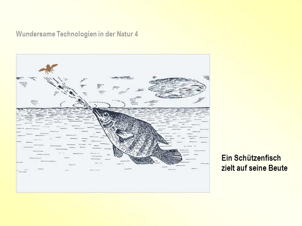 Wundersame Technologien in der Natur 4 Ein Schützenfisch zielt auf seine Beute