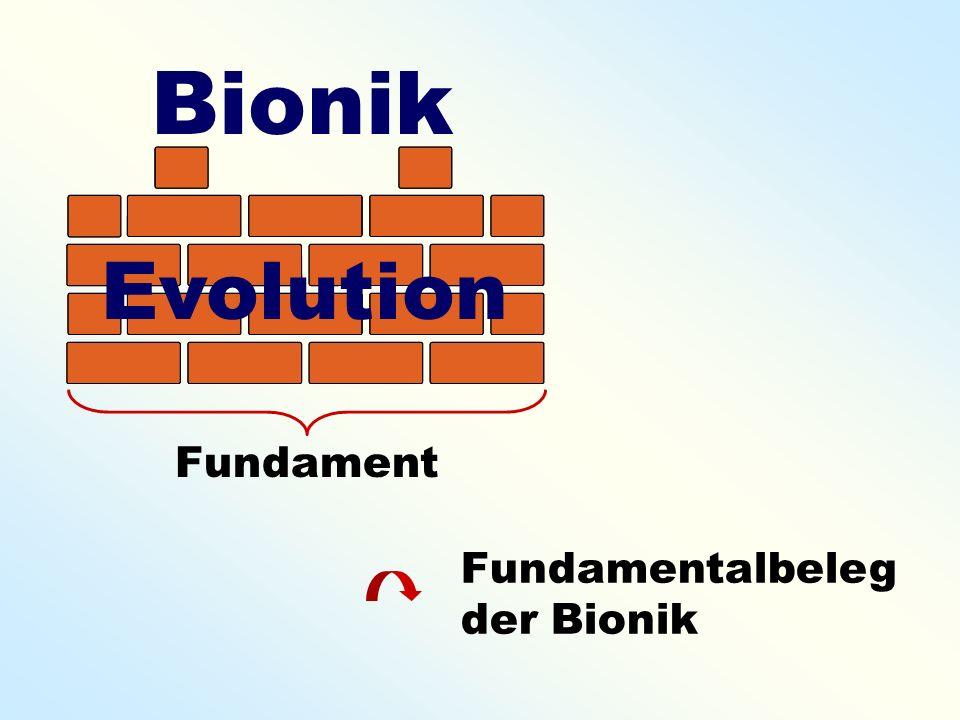 Bionik Evolution Fundament Fundamentalbeleg der Bionik