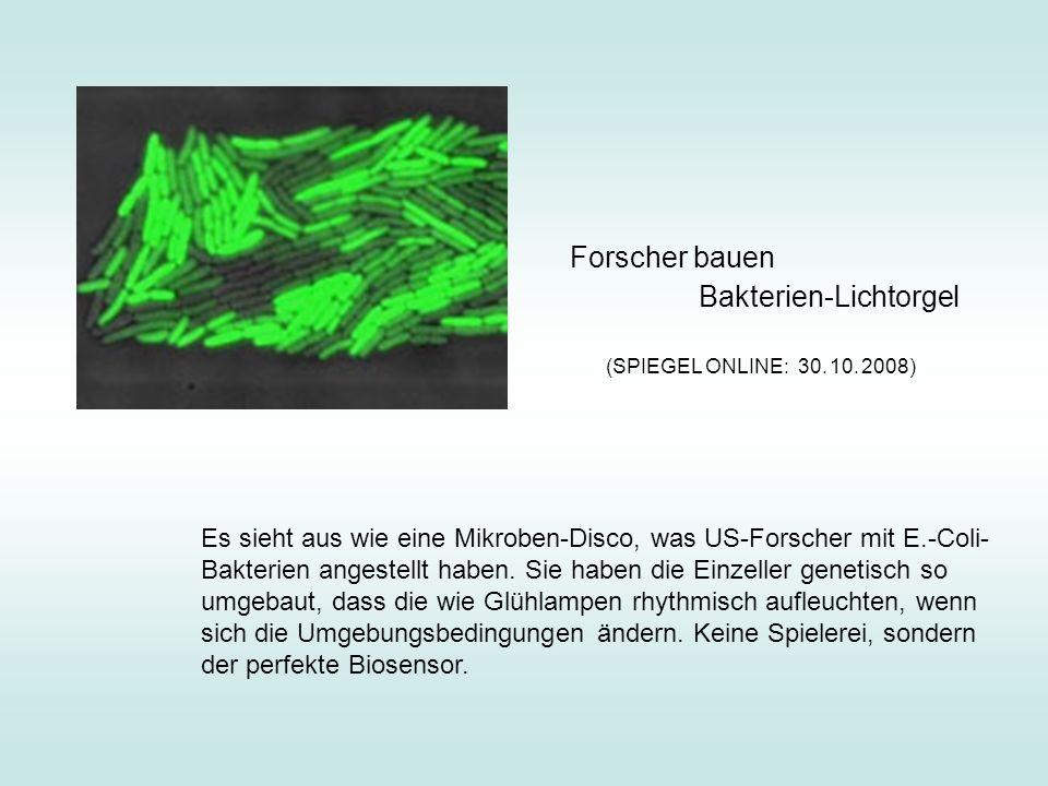 Forscher bauen Bakterien-Lichtorgel Es sieht aus wie eine Mikroben-Disco, was US-Forscher mit E.-Coli- Bakterien angestellt haben. Sie haben die Einze