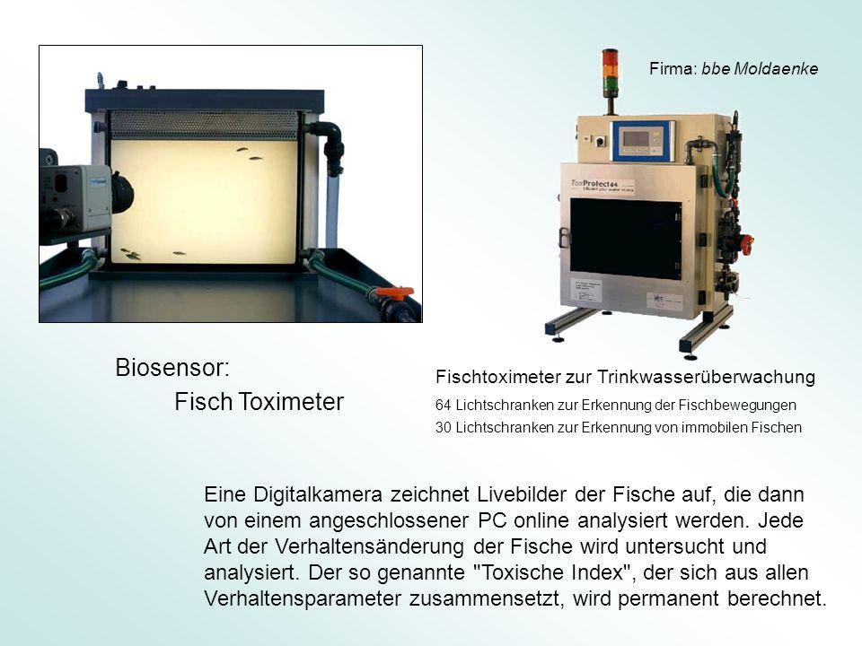 Eine Digitalkamera zeichnet Livebilder der Fische auf, die dann von einem angeschlossener PC online analysiert werden. Jede Art der Verhaltensänderung
