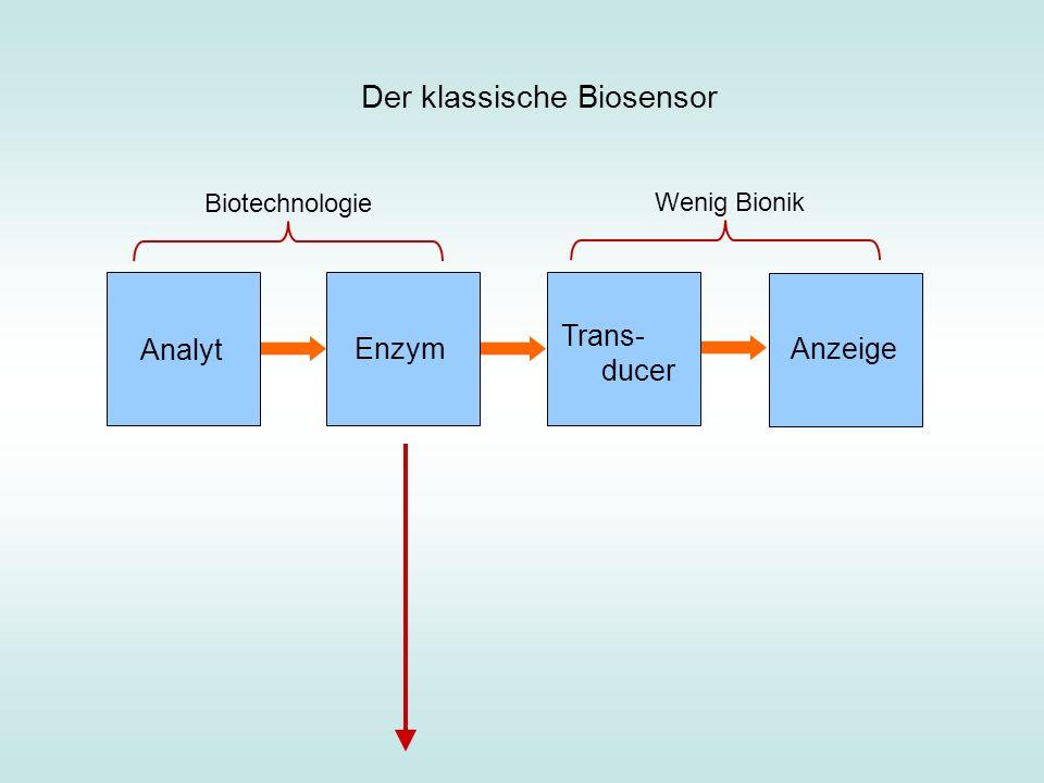 Analyt Enzym Trans- ducer Anzeige Der klassische Biosensor Biotechnologie Wenig Bionik