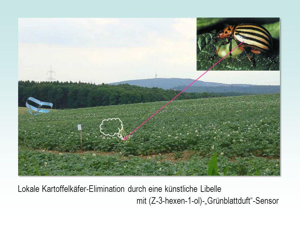 Lokale Kartoffelkäfer-Elimination durch eine künstliche Libelle mit (Z-3-hexen-1-ol)-Grünblattduft-Sensor