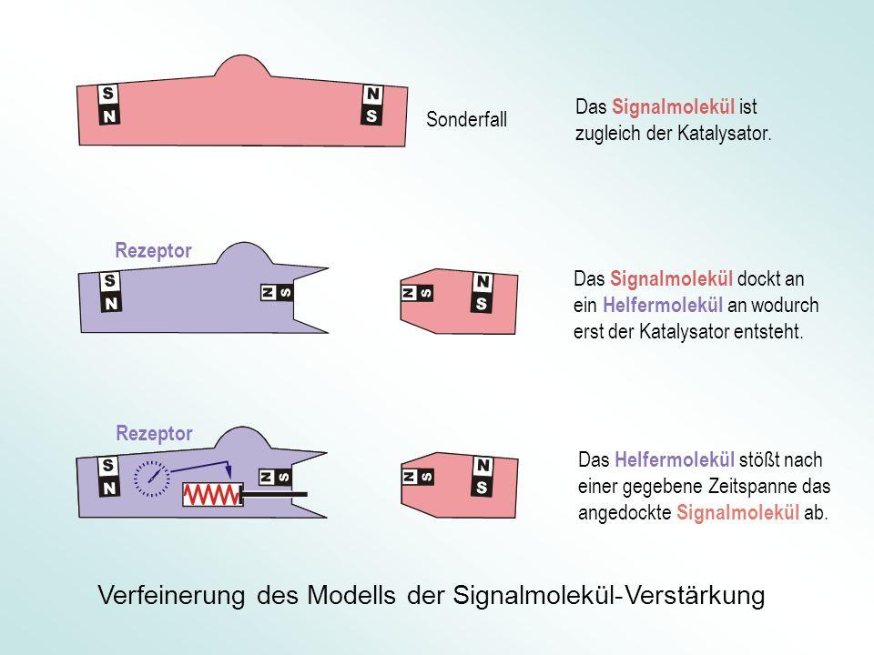 Das Signalmolekül ist zugleich der Katalysator. Das Signalmolekül dockt an ein Helfermolekül an wodurch erst der Katalysator entsteht. Das Helfermolek