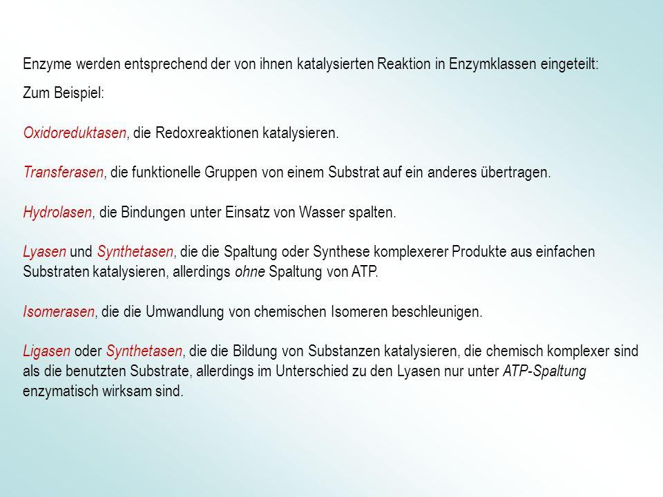 Enzyme werden entsprechend der von ihnen katalysierten Reaktion in Enzymklassen eingeteilt: Zum Beispiel: Oxidoreduktasen, die Redoxreaktionen katalys