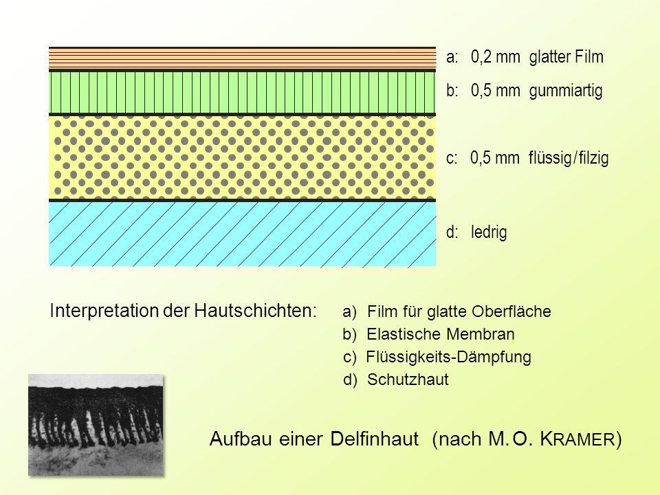 a: 0,2 mm glatter Film b: 0,5 mm gummiartig c: 0,5 mm f lüssig / filzig d: ledrig Aufbau einer Delfinhaut (nach M. O. K RAMER ) Interpretation der Hau
