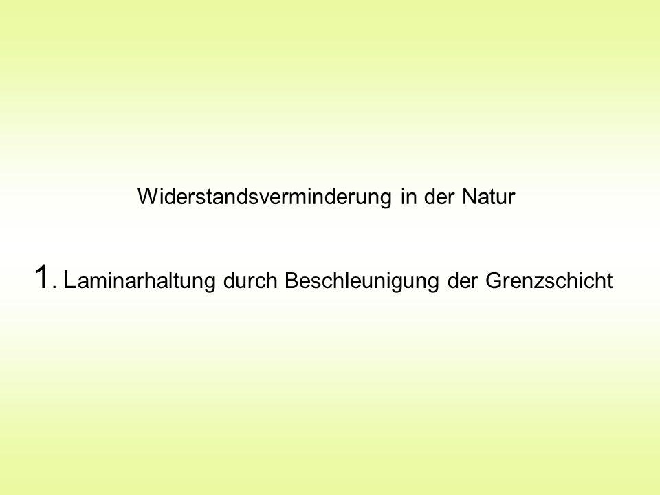 Widerstandsverminderung in der Natur 1. L aminarhaltung durch Beschleunigung der Grenzschicht
