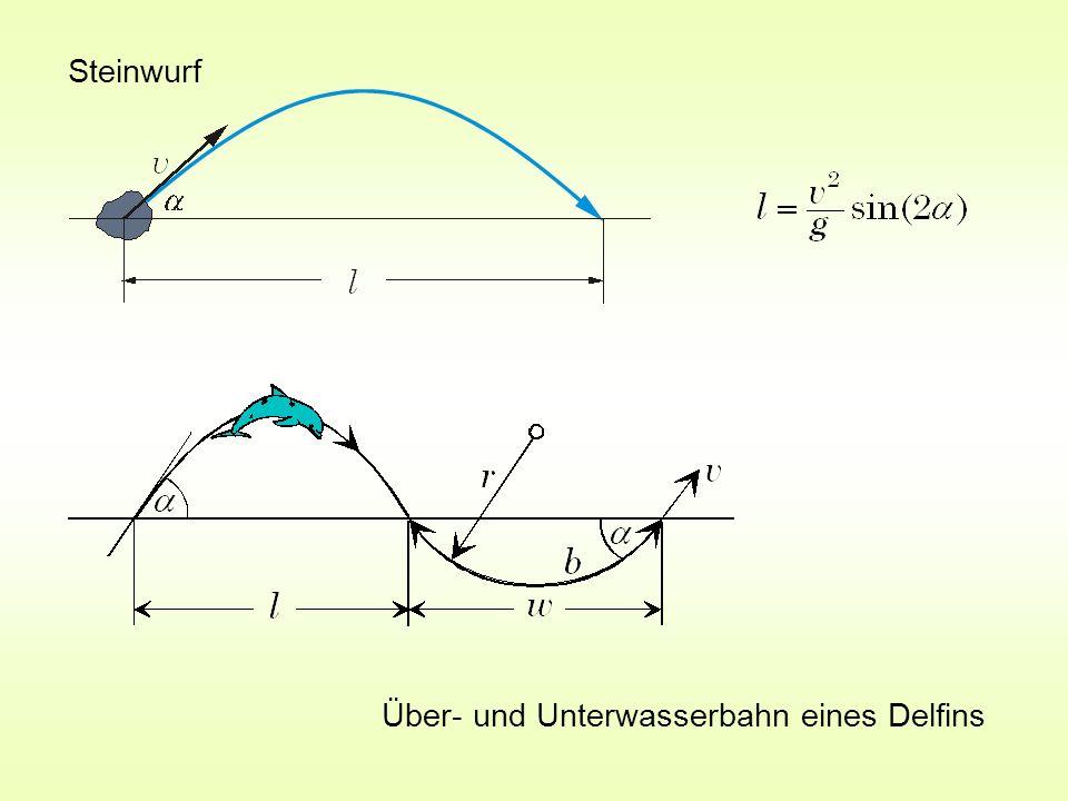 Steinwurf Über- und Unterwasserbahn eines Delfins