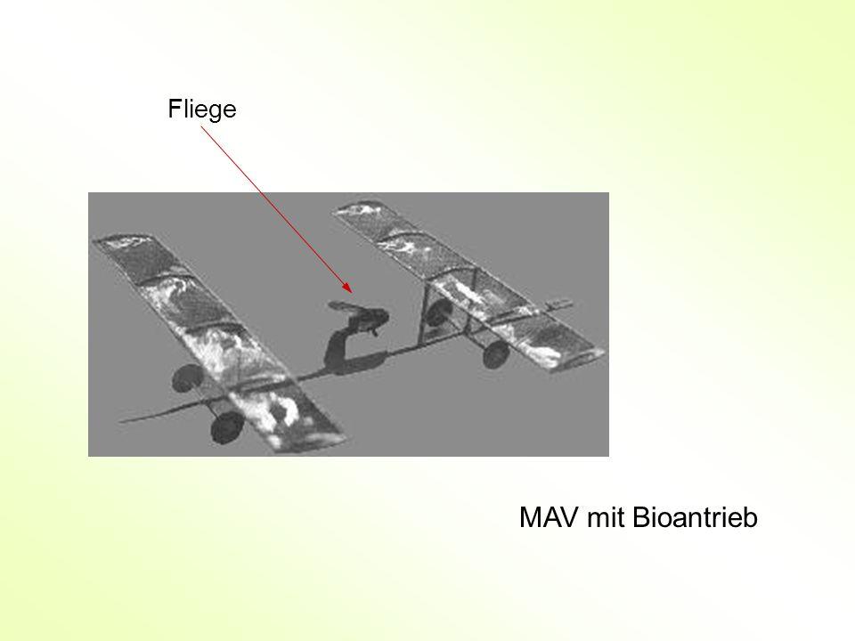 MAV mit Bioantrieb Fliege