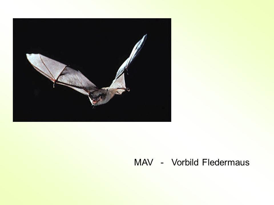 MAV - Vorbild Fledermaus