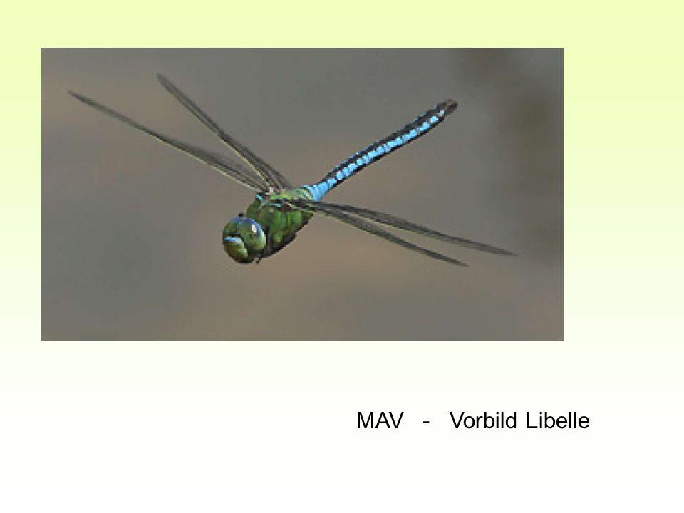 MAV - Vorbild Libelle