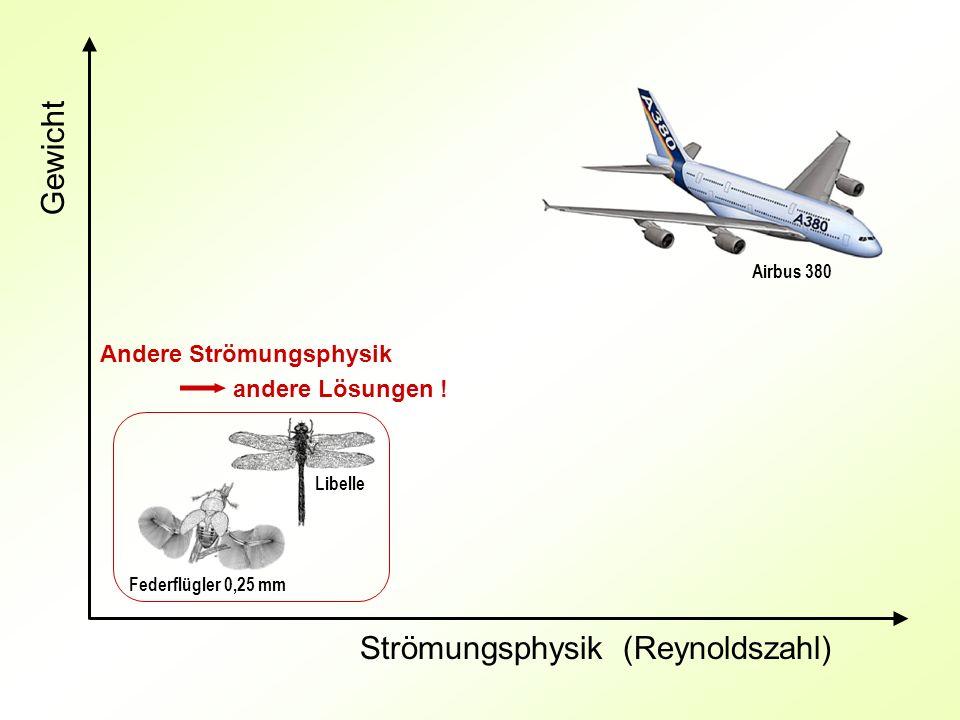 Gewicht Strömungsphysik (Reynoldszahl) Andere Strömungsphysik andere Lösungen ! Federflügler 0,25 mm Libelle Airbus 380