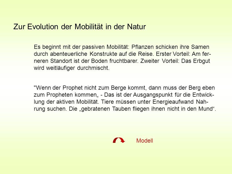Zur Evolution der Mobilität in der Natur Es beginnt mit der passiven Mobilität: Pflanzen schicken ihre Samen durch abenteuerliche Konstrukte auf die R