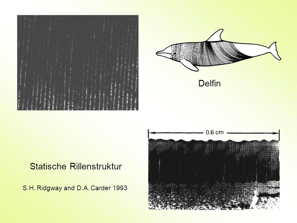 Statische Rillenstruktur Delfin S. H. Ridgway and D. A. Carder 1993