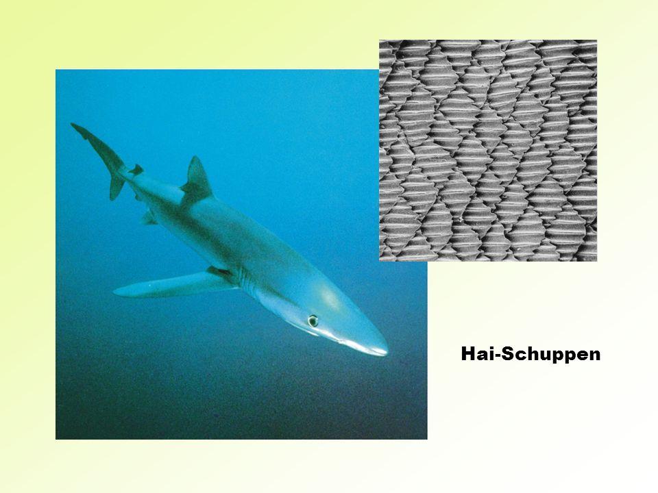 Hai-Schuppen