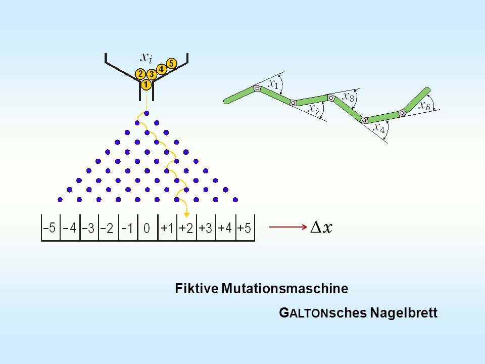 Fiktive Mutationsmaschine G ALTON sches Nagelbrett x