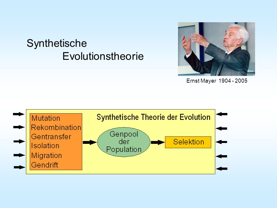 Ernst Mayer 1904 - 2005 Synthetische Evolutionstheorie