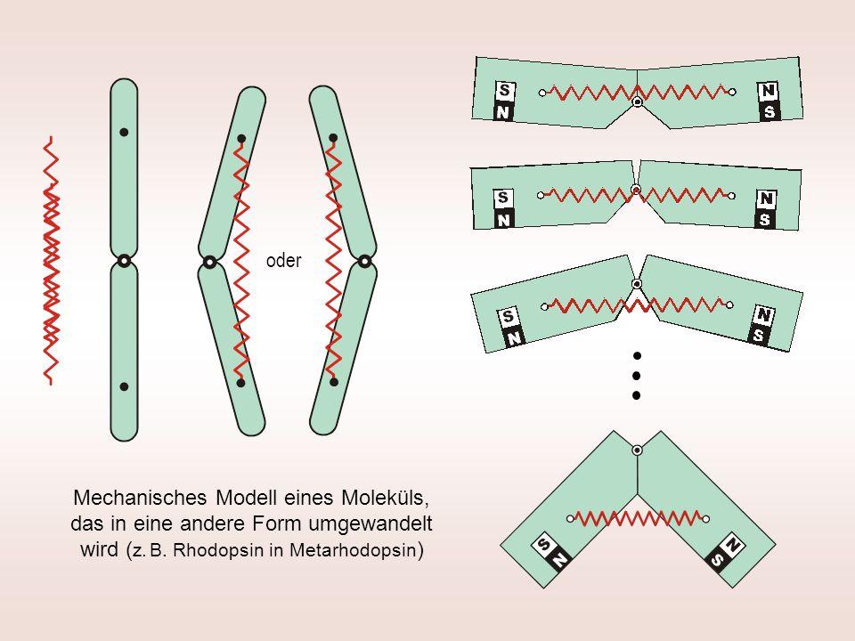 oder Mechanisches Modell eines Moleküls, das in eine andere Form umgewandelt wird ( z. B. Rhodopsin in Metarhodopsin )