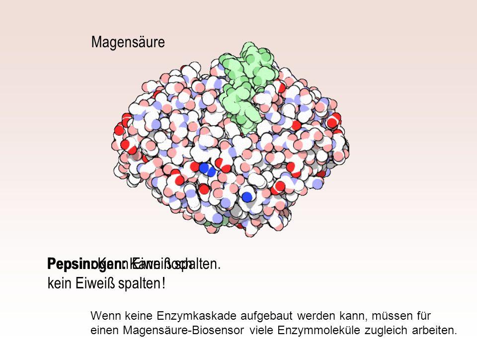 Pepsinogen: Kann noch kein Eiweiß spalten ! Magensäure Pepsin: Kann Eiweiß spalten. Wenn keine Enzymkaskade aufgebaut werden kann, müssen für einen Ma