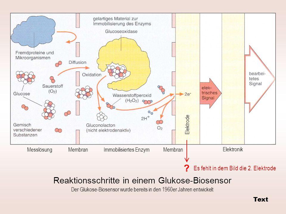 Messlösung Elektrode Elektronik Immobilisiertes Enzym Membran Reaktionsschritte in einem Glukose-Biosensor .