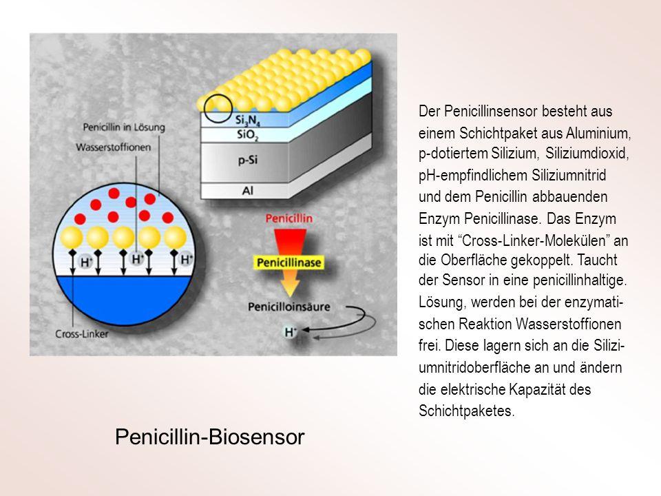 Der Penicillinsensor besteht aus einem Schichtpaket aus Aluminium, p-dotiertem Silizium, Siliziumdioxid, pH-empfindlichem Siliziumnitrid und dem Penic