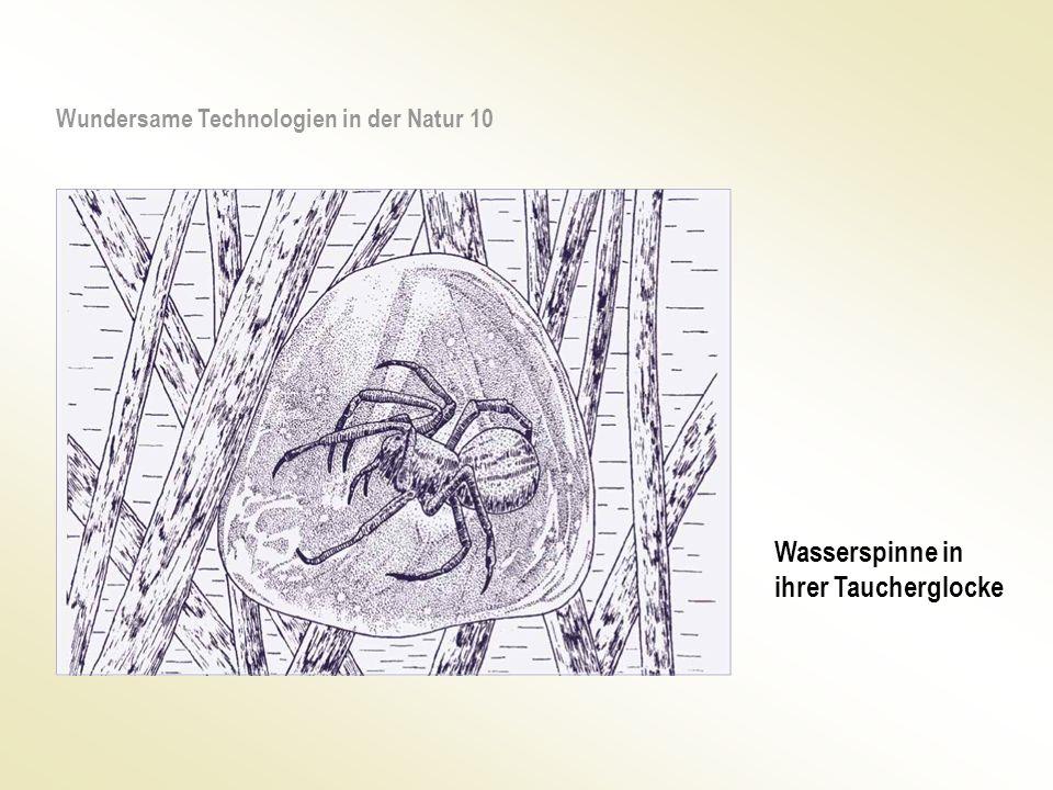 Wasserspinne in ihrer Taucherglocke Wundersame Technologien in der Natur 10