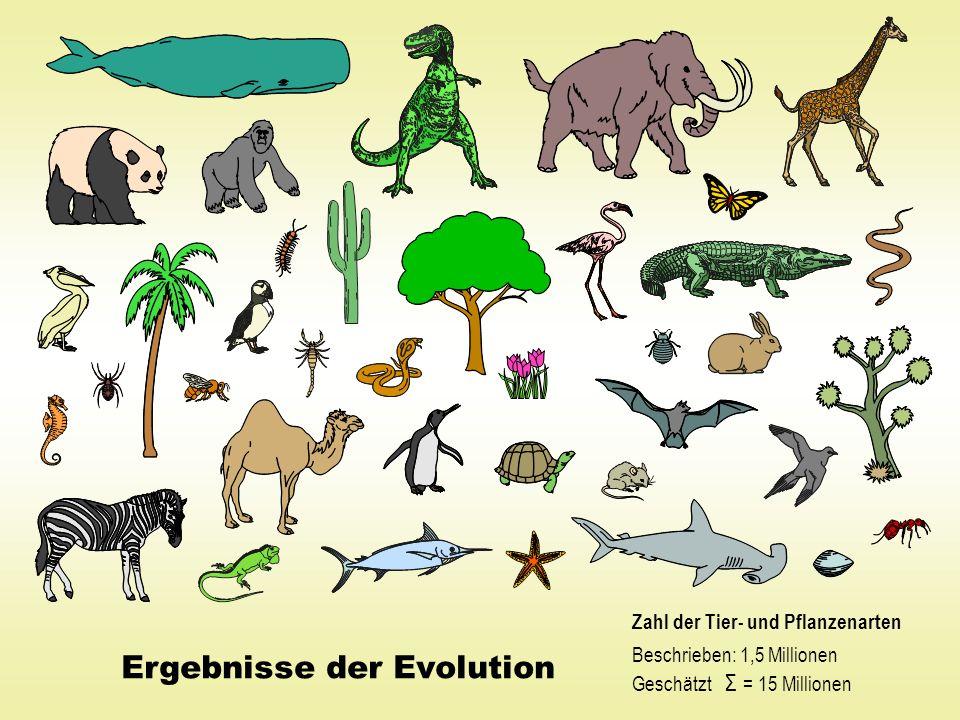 Ergebnisse der Evolution Zahl der Tier- und Pflanzenarten Beschrieben: 1,5 Millionen Geschätzt Σ = 15 Millionen