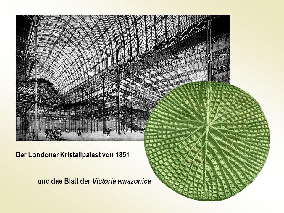 Der Londoner Kristallpalast von 1851 und das Blatt der Victoria amazonica