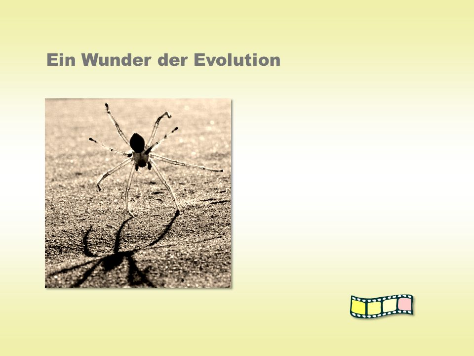 Ein Wunder der Evolution