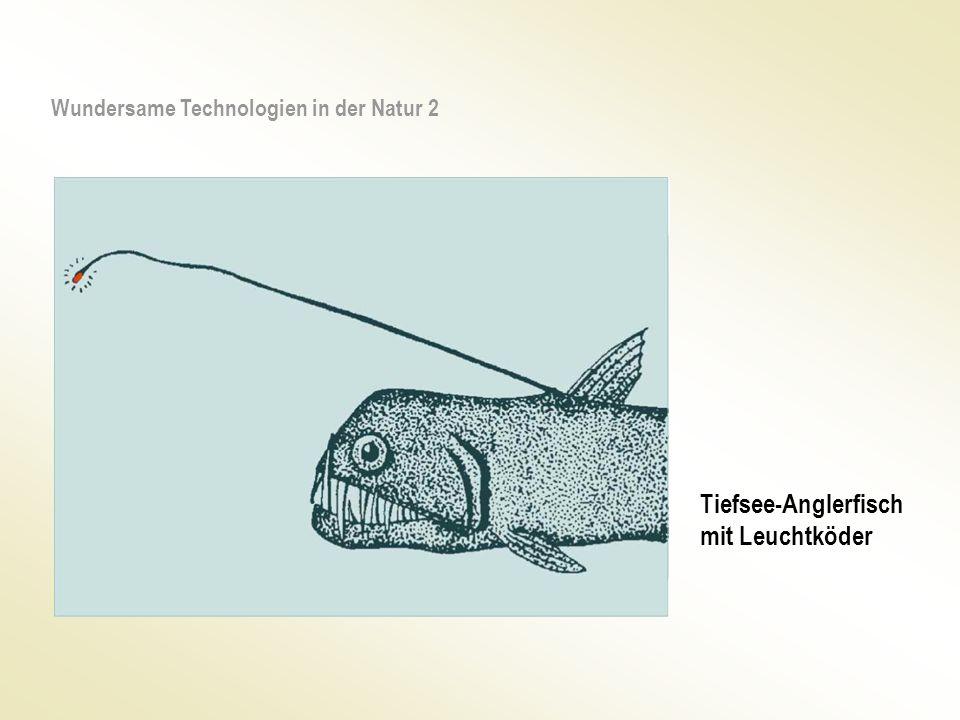 Tiefsee-Anglerfisch mit Leuchtköder Wundersame Technologien in der Natur 2